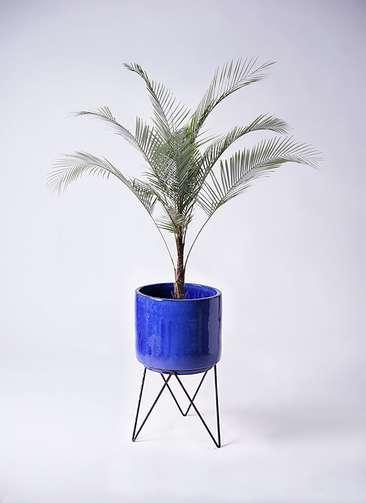 観葉植物 ヒメココス 8号 ビトロ エンデカ 鉢カバースタンド付 ブルー 付き