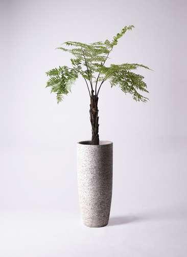 観葉植物 ヘゴ 8号 エコストーントールタイプ Gray 付き