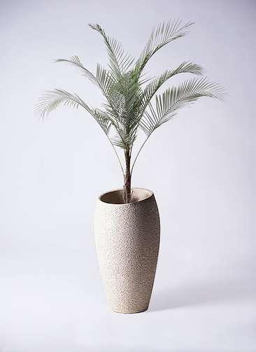 観葉植物 ヒメココス 8号 エコストーントールタイプ Light Gray 付き