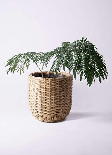 観葉植物 リュウビンタイ 8号 ウィッカーポットエッグ ベージュ 付き