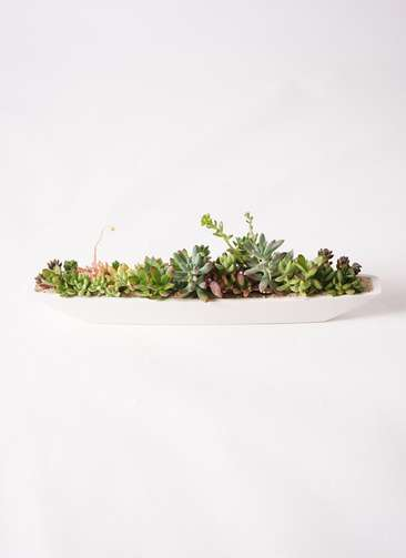 寄せ植え ふね型 白砂 #002