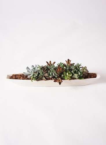 寄せ植え ふね型 バークチップ #002