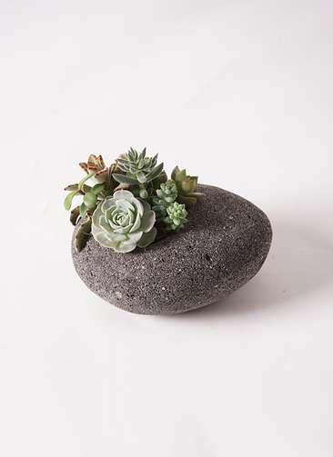 寄せ植え 黒石 #004