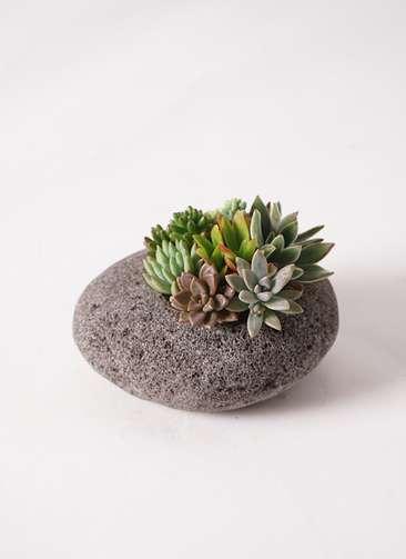 寄せ植え 黒石 #003