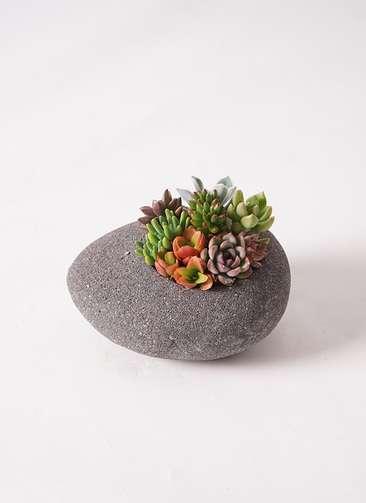 寄せ植え 黒石 #002