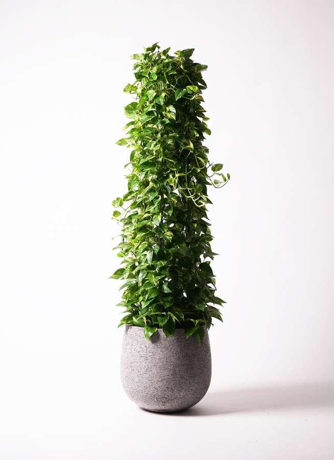 観葉植物 ポトス 10号 エコストーンGray 付き