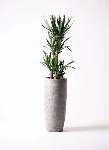 観葉植物 ユッカ 8号 ノーマル エコストーントールタイプ Gray 付き