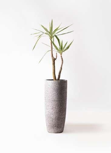 観葉植物 ユッカ 8号 斑入り エコストーントールタイプ Gray 付き