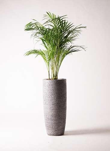 観葉植物 アレカヤシ 8号 エコストーントールタイプ Gray 付き