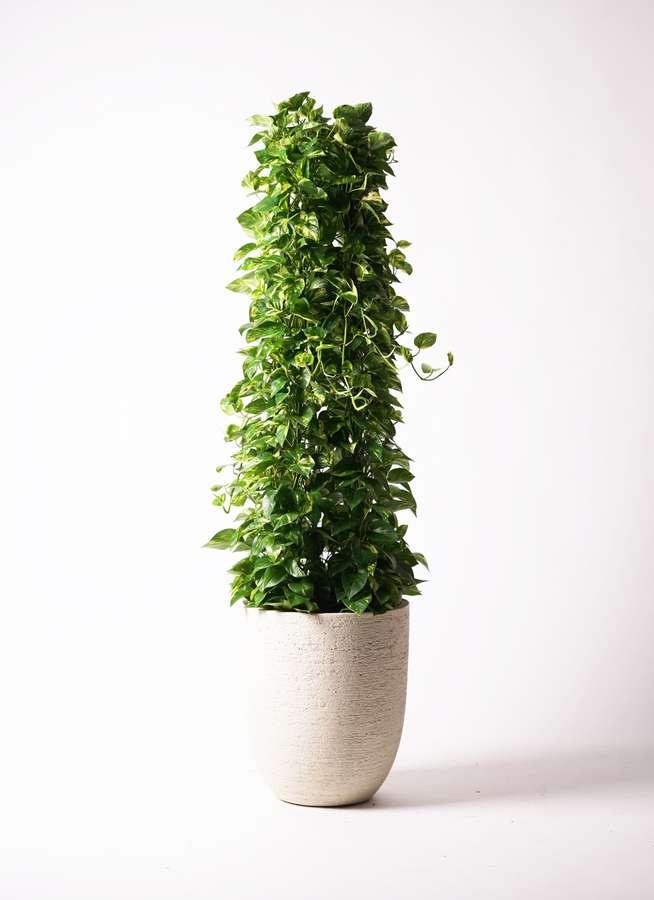 観葉植物 ポトス 10号 ビアスアルトエッグ 白 付き