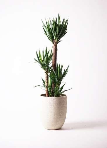 観葉植物 ユッカ 10号 ノーマル ビアスアルトエッグ 白 付き