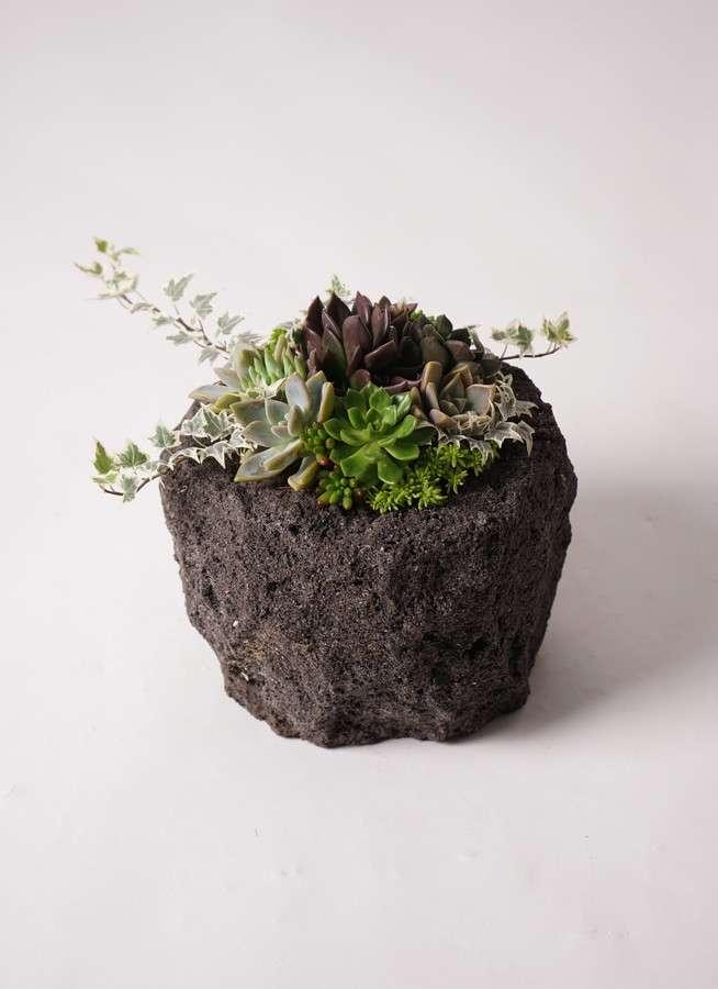 寄せ植え Rugged Stone Pot #001