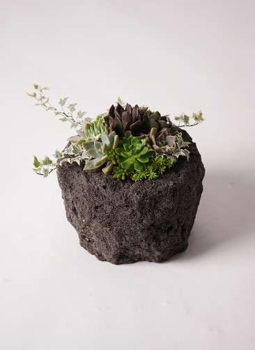寄せ植え Rugged Stone Pot #001