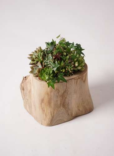 寄せ植え Teak Wood Original #001