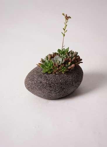 寄せ植え 黒石 #006