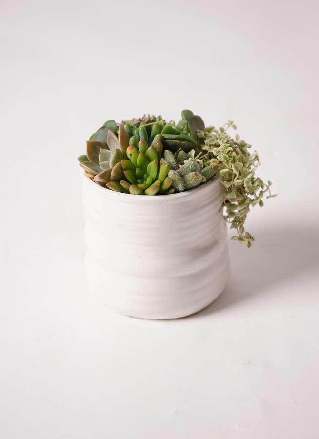 寄せ植え Ceramic Mat White #001