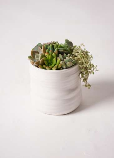 寄せ植え Ceramic Mat White #001