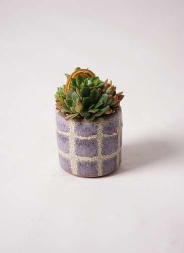 寄せ植え Favor Pot Gray #003