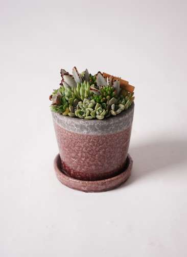 寄せ植え クレーパ4号 受け皿付き 紫 #001