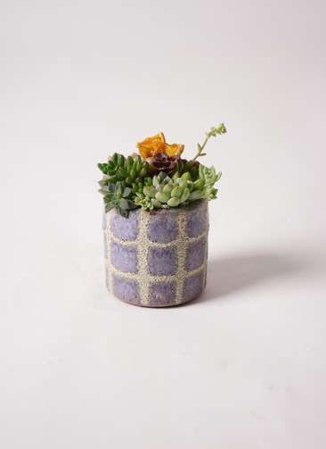 寄せ植え Favor Pot Gray #002
