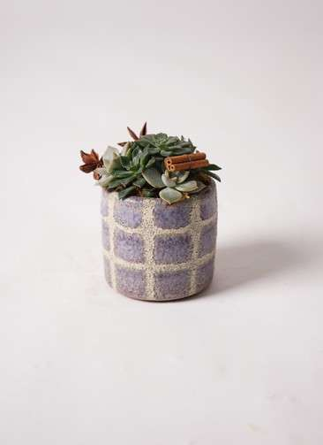 寄せ植え Favor Pot Gray #001