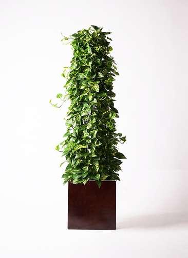 観葉植物 ポトス 10号 MOKU キューブ 付き