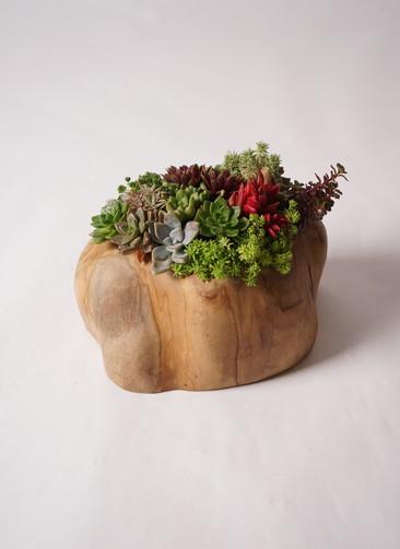 寄せ植え Teak Wood Wide #001