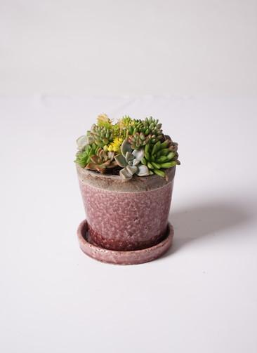 寄せ植え クレーパー 4号 受け皿付き 紫 #001