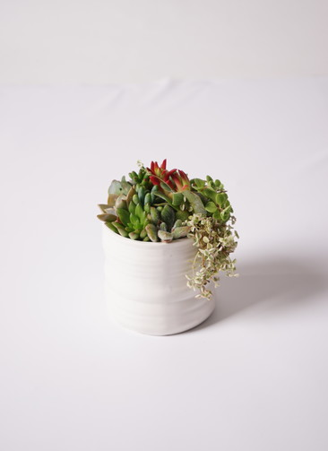 寄せ植え Ceramic Mat White #003