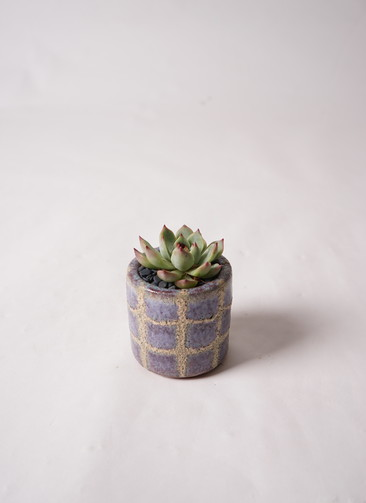 寄せ植え Favor Pot Gray #004