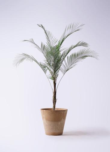 観葉植物 ヒメココス 8号 アートストーン ラウンド ベージュ 付き
