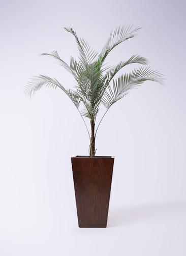 観葉植物 ヒメココス 8号 MOKU スクエア 付き
