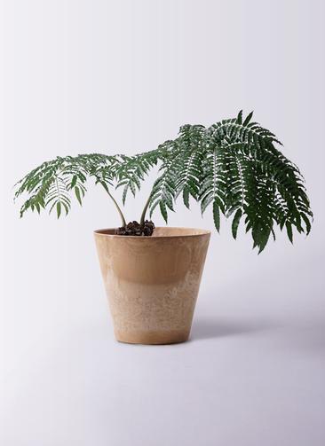 観葉植物 リュウビンタイ 8号 アートストーン ラウンド ベージュ 付き