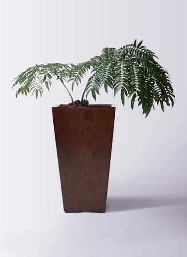 観葉植物 リュウビンタイ 8号 MOKU スクエア 付き