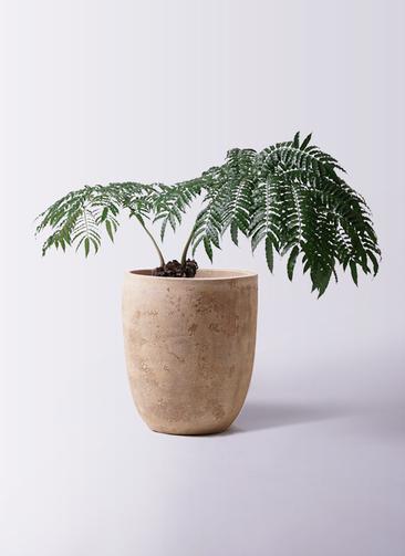 観葉植物 リュウビンタイ 8号 ルーガ アンティコ アルトエッグ 付き