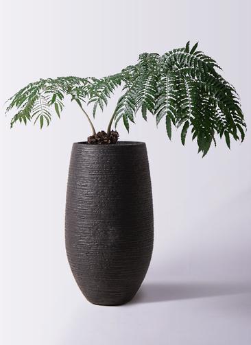 観葉植物 リュウビンタイ 8号 フォンティーヌトール 黒 付き