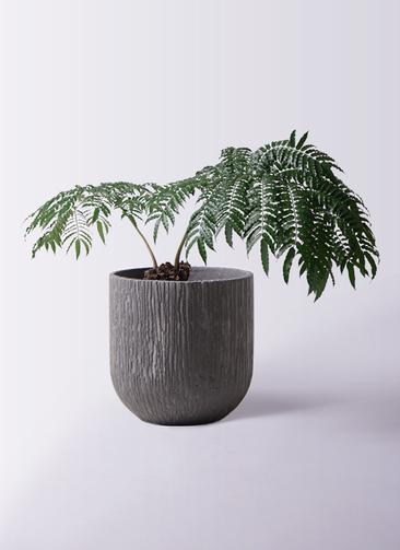 観葉植物 リュウビンタイ 8号 カルディナダークグレイ 付き