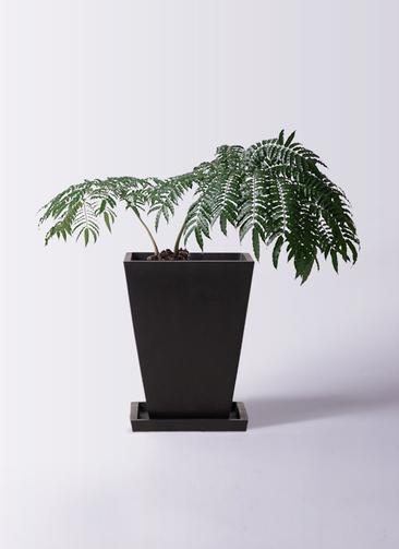 観葉植物 リュウビンタイ 8号 パウダーストーン 黒 付き