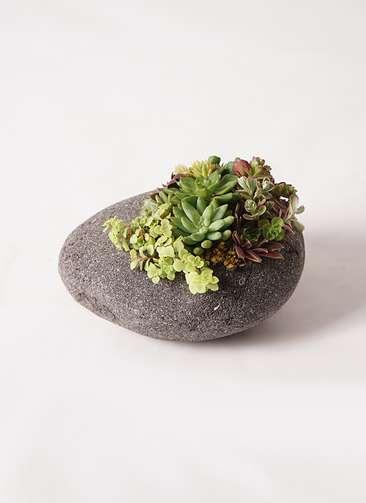 寄せ植え 黒石