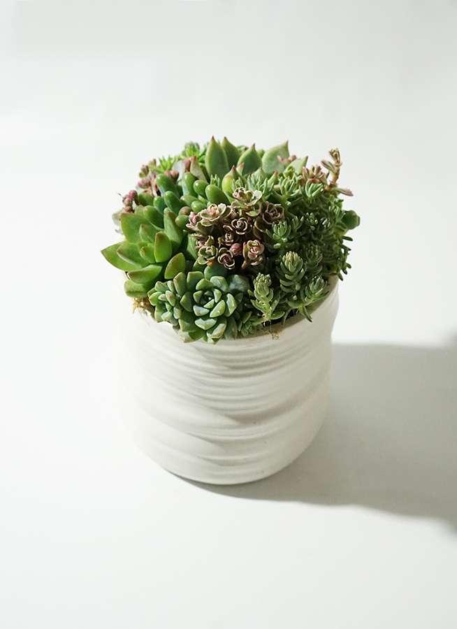 寄せ植え Ceramic Mat White #005