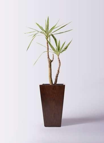 観葉植物 ユッカ 8号 斑入り MOKU スクエア 付き