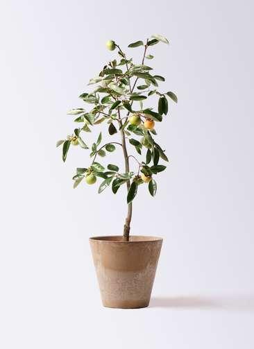 柿の木 8号 富有 アートストーン ラウンド ベージュ 付き
