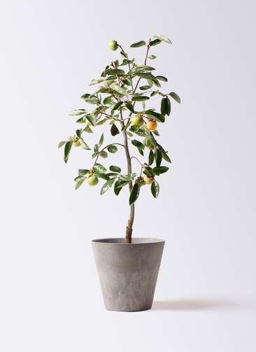 柿の木 8号 富有 アートストーン ラウンド グレー 付き