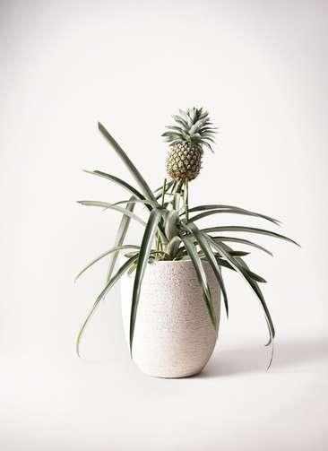 パイナップルの木 10号 ビアスアルトエッグ 白 付き