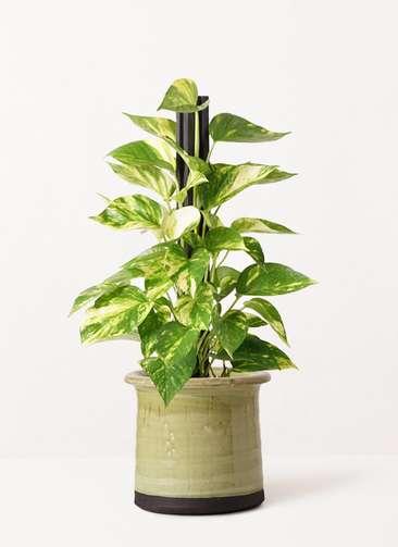 観葉植物 ポトス 4号 アンティークテラコッタ グリーン 付き