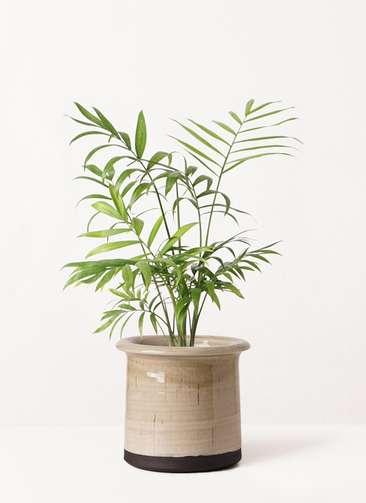 観葉植物 テーブルヤシ 4号 アンティークテラコッタ グレイ 付き