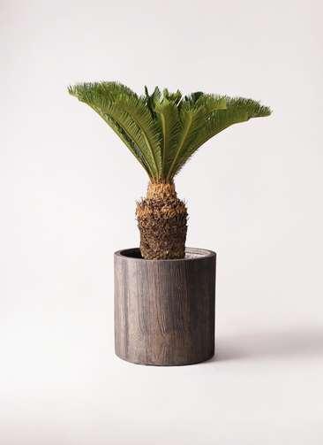 観葉植物 ソテツ 10号 アルファシリンダープランター 付き