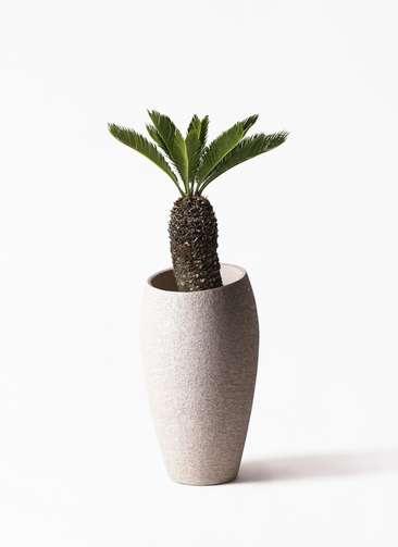 観葉植物 ソテツ 8号 エコストーントールタイプ Light Gray 付き