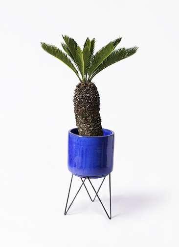 観葉植物 ソテツ 8号 ビトロ エンデカ 鉢カバースタンド付 ブルー 付き
