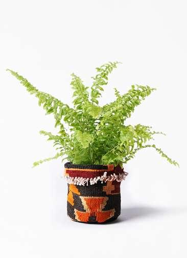 観葉植物 ネフロピレス 3.5号 キリムポット 付き